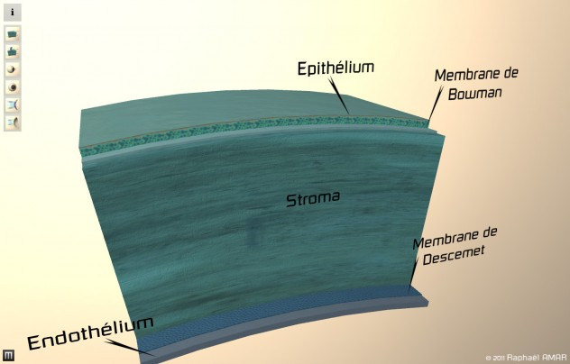 Vue en coupe de la cornée montrant les differentes couches: epithélium, membrane de bowman, stroma, membrane de descemet et endothélium