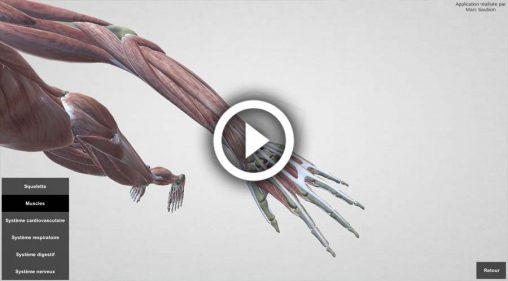 corps-humainr-3D-interactif-webgl