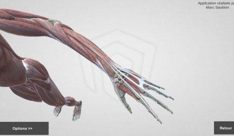 Corps humain 3D
