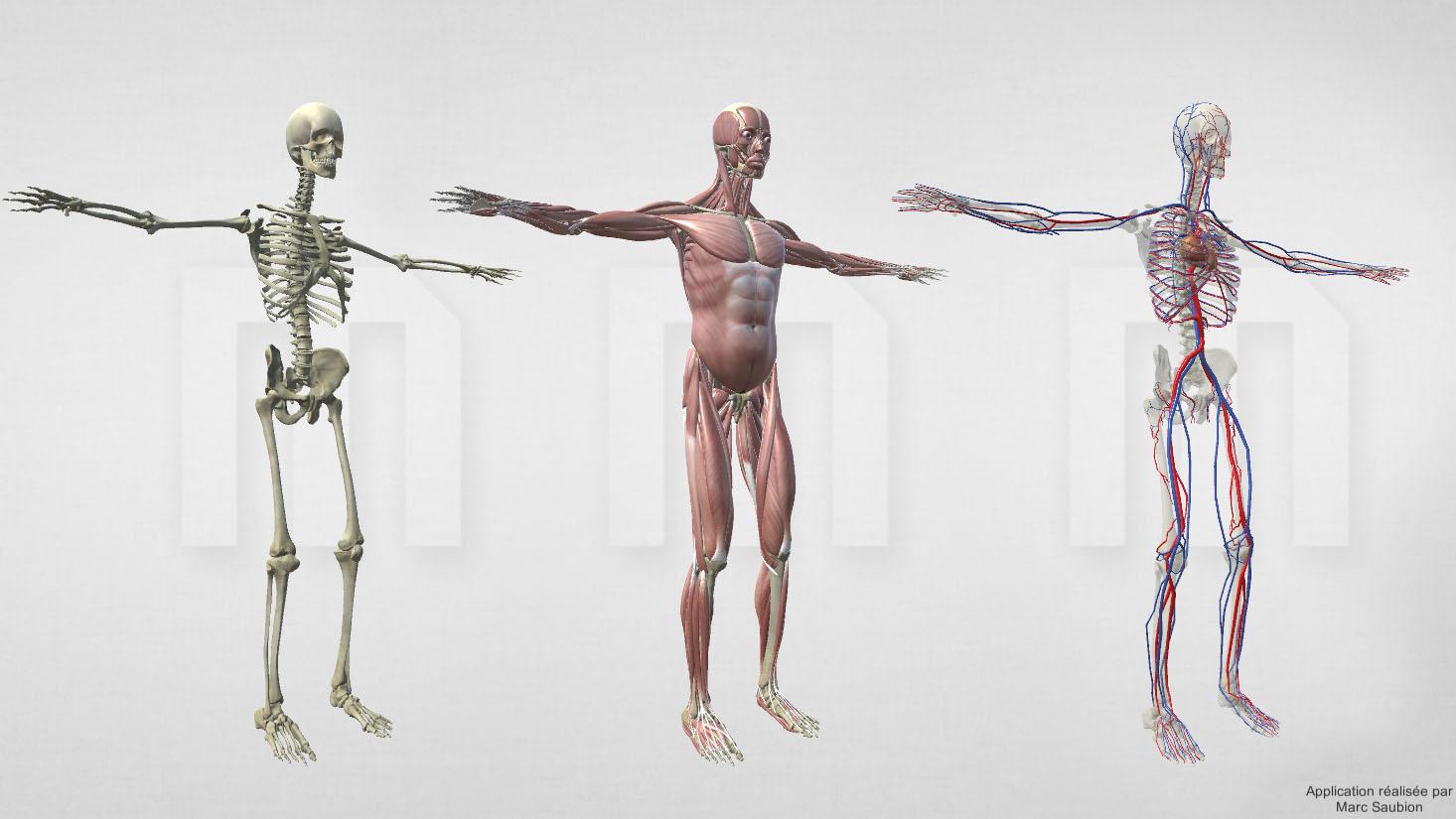 corps-humain-webgl-3D